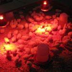 Lắp đặt đèn úm gà con hồng ngoại trong chăn nuôi trang trại